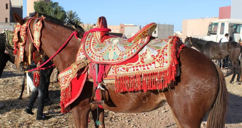 Fantasia Pferd