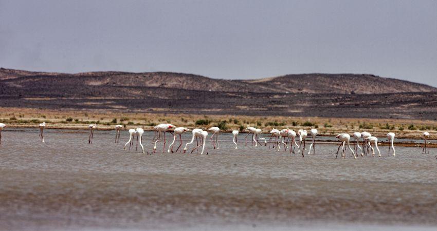 Flamingos Nordafrika