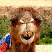 Marokko Blog
